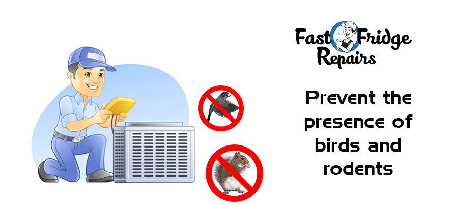 Prevent the Presence of Birds and Rodents